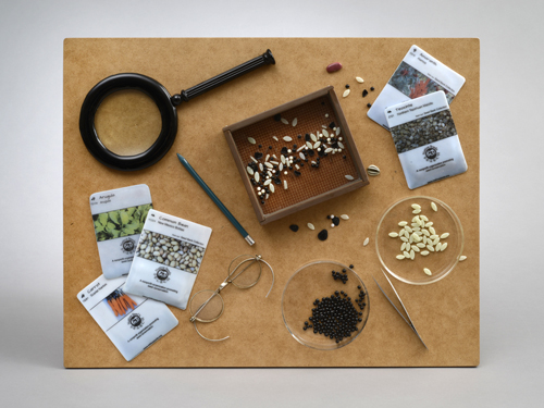 Seeds Project -